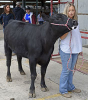 Locals exhibit at district livestock show