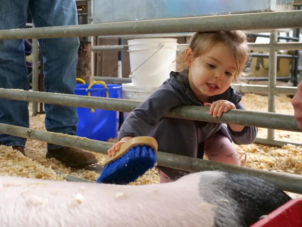 Living with livestock: Feliciana students show farm efforts in annual show